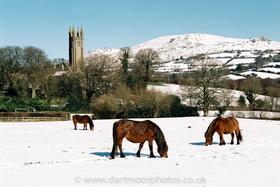 Dartmoor Ponies, Widecombe-in-the-Moor