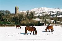 Dartmoor Ponies, Widecombe-in-the-Moor