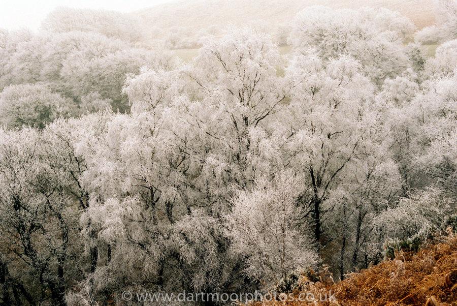 Hoarfrost Yarner Woods