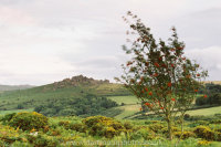 Houndtor with Mountain Ash
