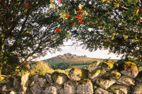 Houndtor framed by Mountain Ash and Stone Wall