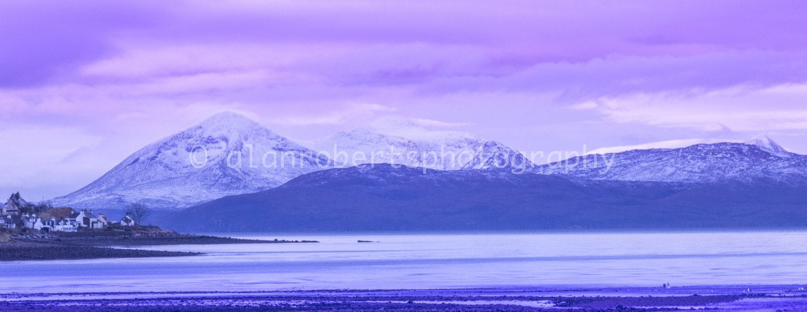 APPLECROSS PURPLE HAZE