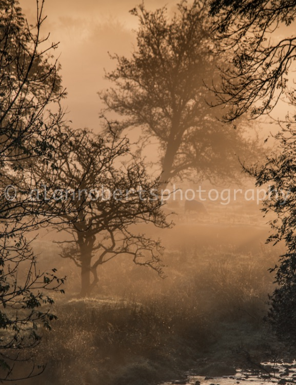 EARLY MORNING BROOK MIST