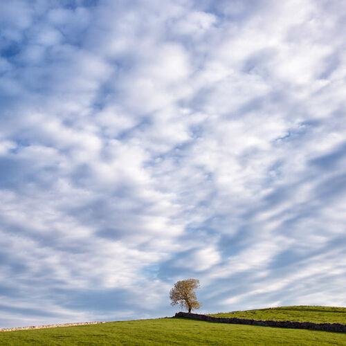 LONE TREE, BIG SKY
