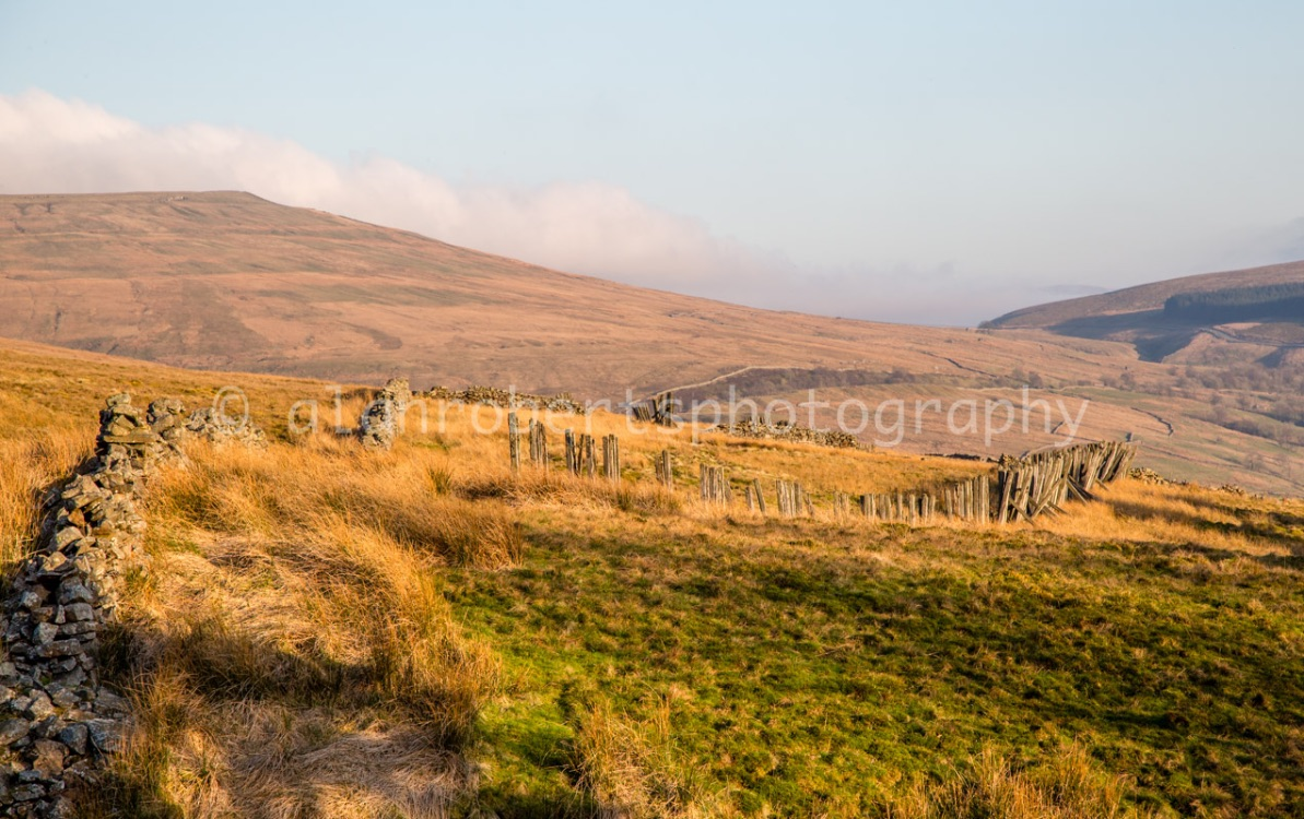 DENTDALE EARLY EVENING