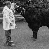 Mr Jones with Prize Winning Welsh Black Bull