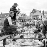 Sheep Sale