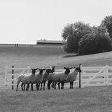 Welsh National Sheepdog Trials