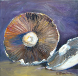 Mushroom. Oil on box canvas. 30 x 30 cms SOLD