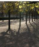 Saturday morning in Paris 2007