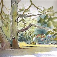 Big Tree - 2013