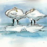 Sleeping Swans - Welney 2016