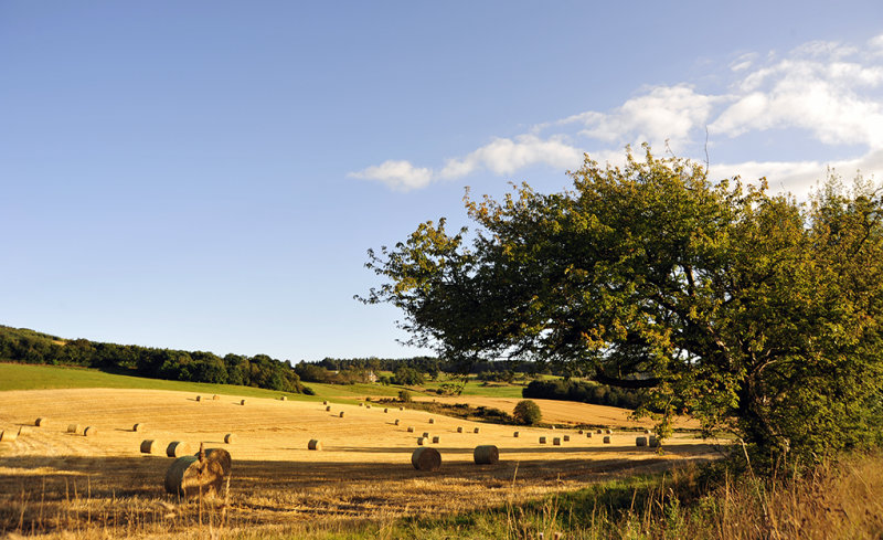 Harvest at Muirhall