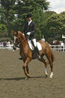 Royal Show horse
