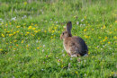 Bunny in Summer Meadow