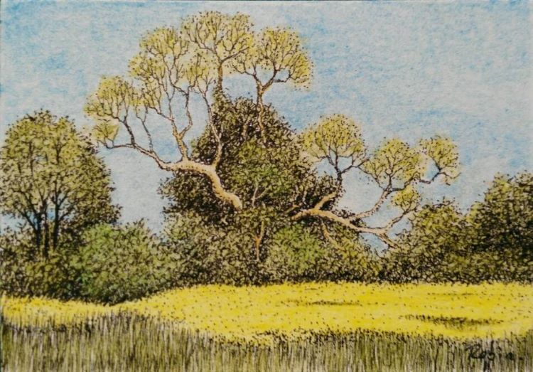 Yellow Field near Mareham Pastures, Sleaford, Lincolnshire