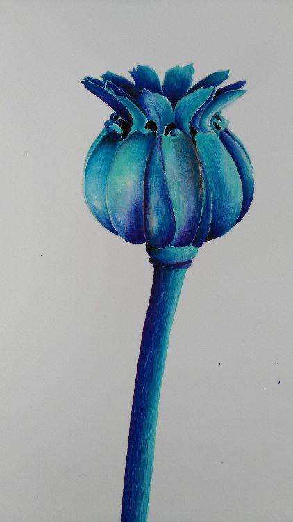 Seed Head Blues