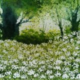 Cow Parsley near Jims. SOLD