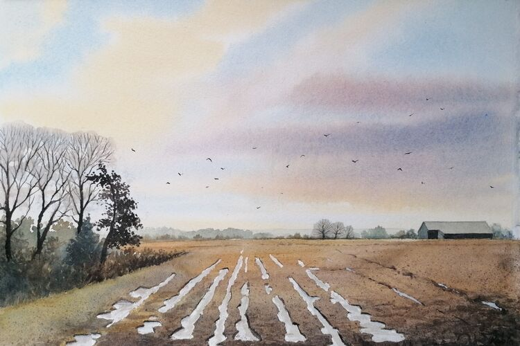 Field with puddles and crows