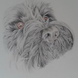 Fiona Dog SOLD