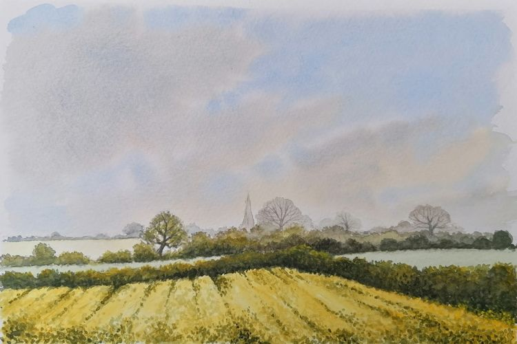 Yellow Fields near Rauceby