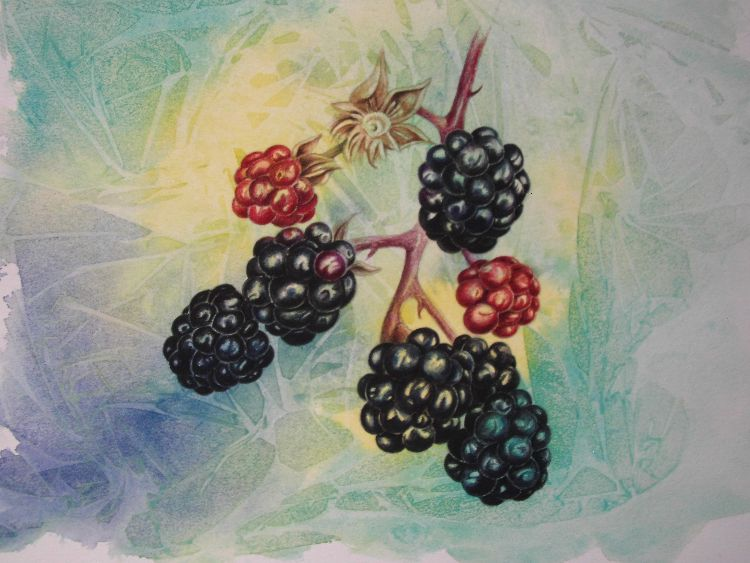 blackberries SOLD