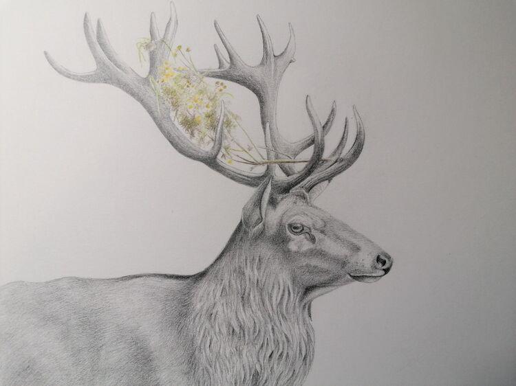 flower power. red deer stag