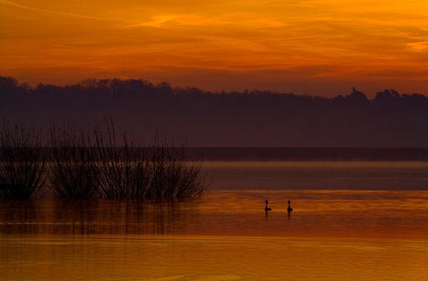 Bewl Water Dawn