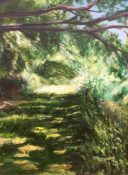 Pochard dappled light