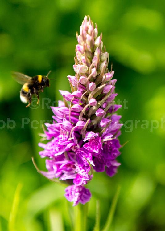 Orchid Landing