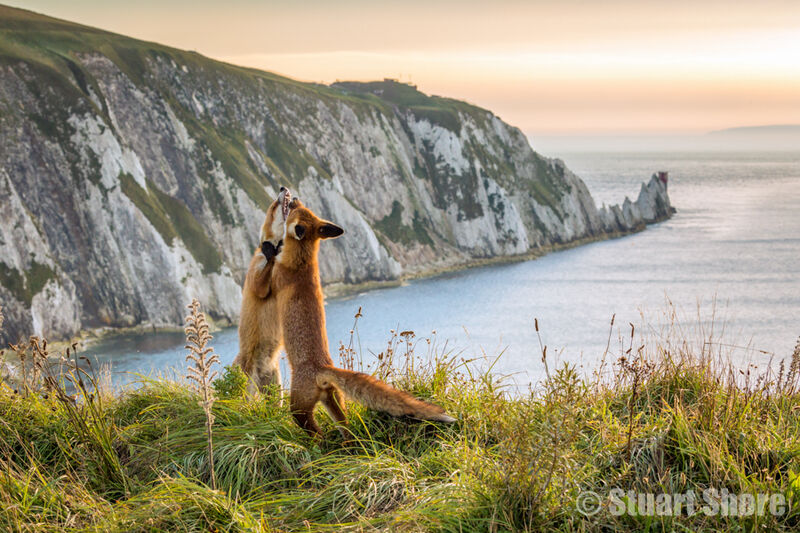 'Playtime at the Needles'