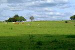 Castley Moor