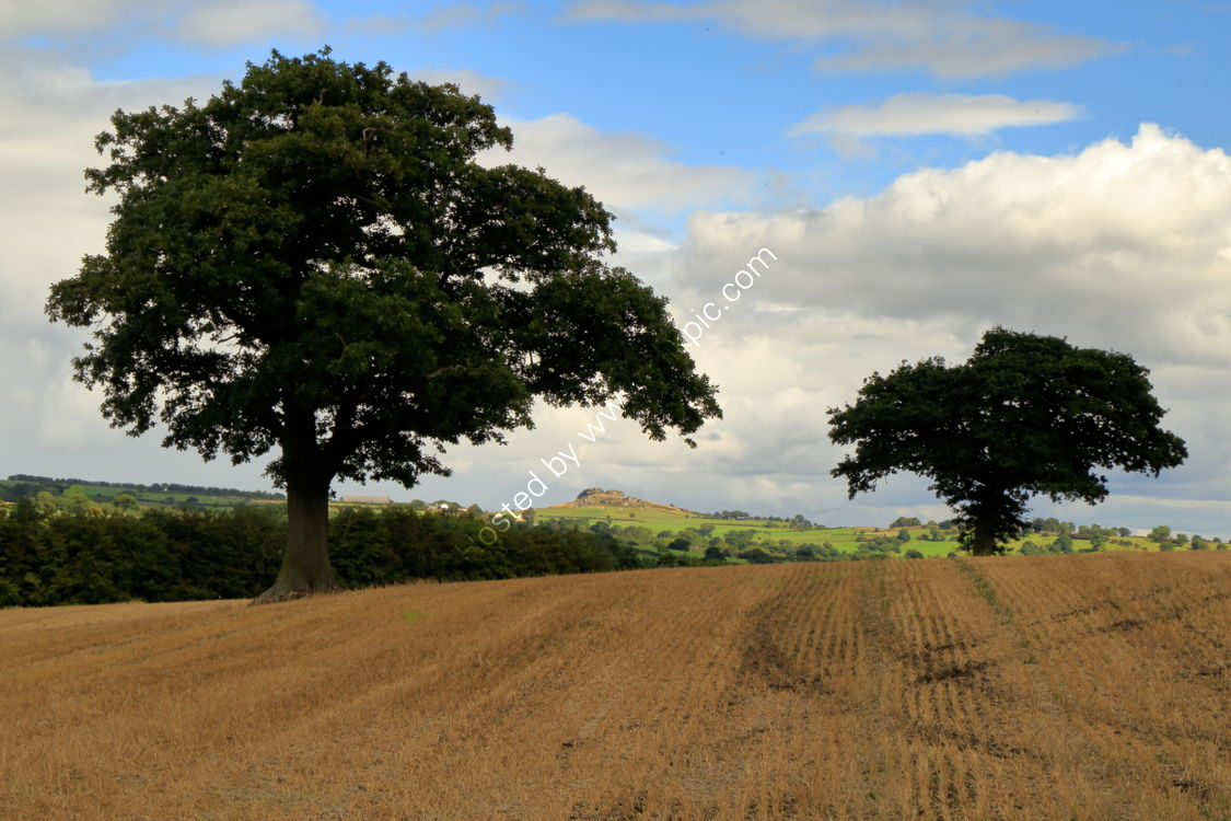 Farnley field in September