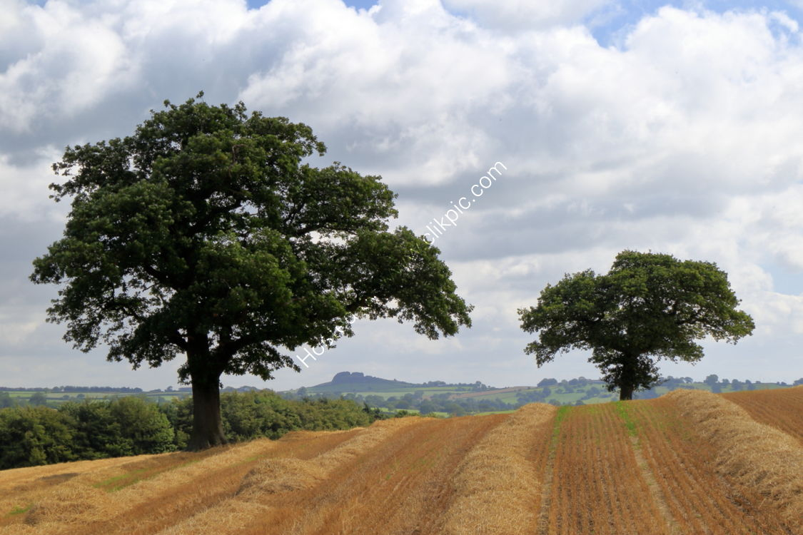 Farnley field in early August
