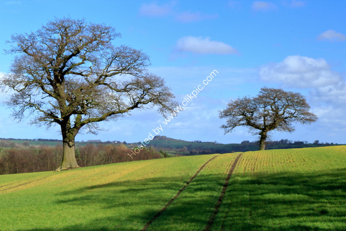 Farnley field in March