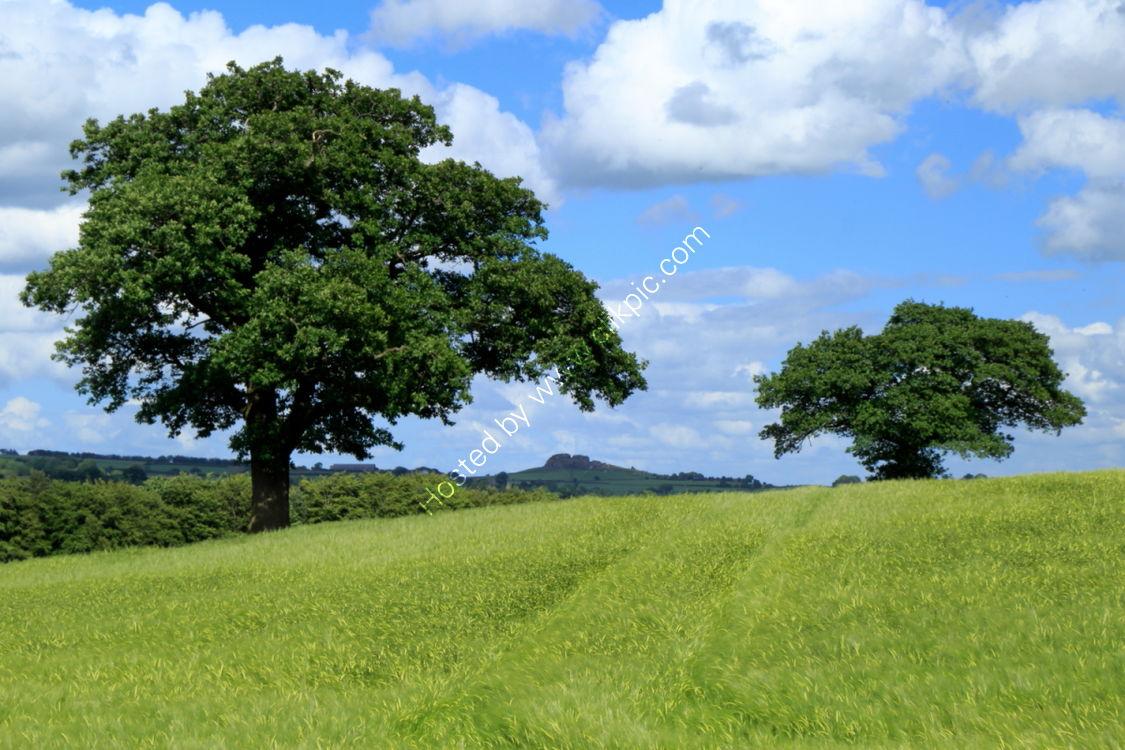 Farnley field in June