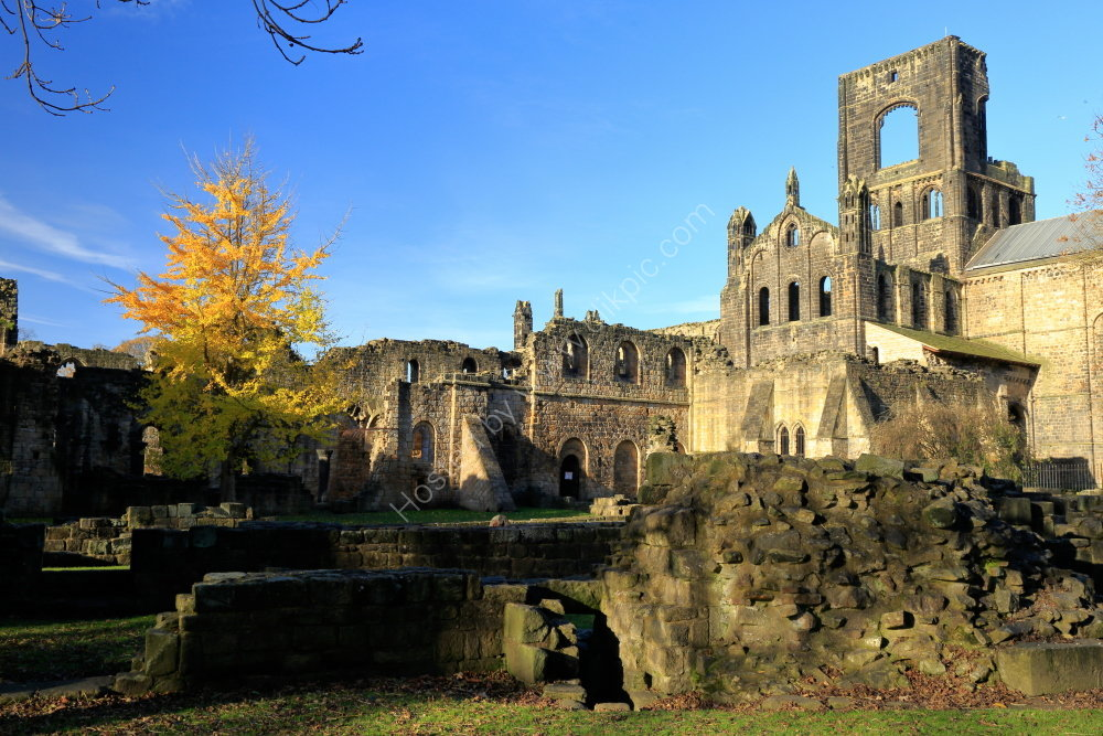 Kirkstall Abbey with Ginkgo Biloba tree, autumn