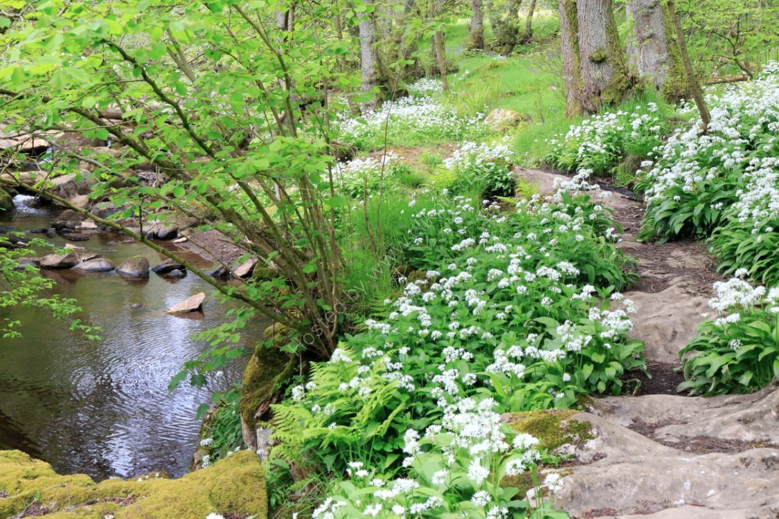 How Stean Beck, Nidderdale, springtime