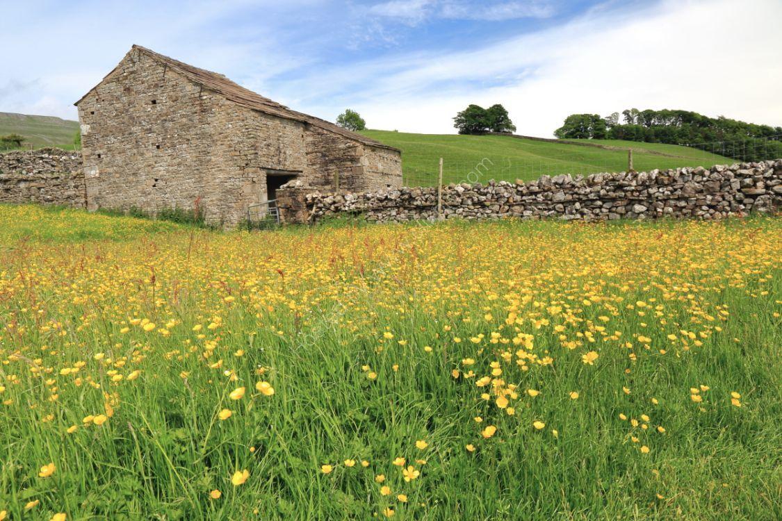 Drystone wall and barn in wildflower meadow near Hardraw, Wensleydale