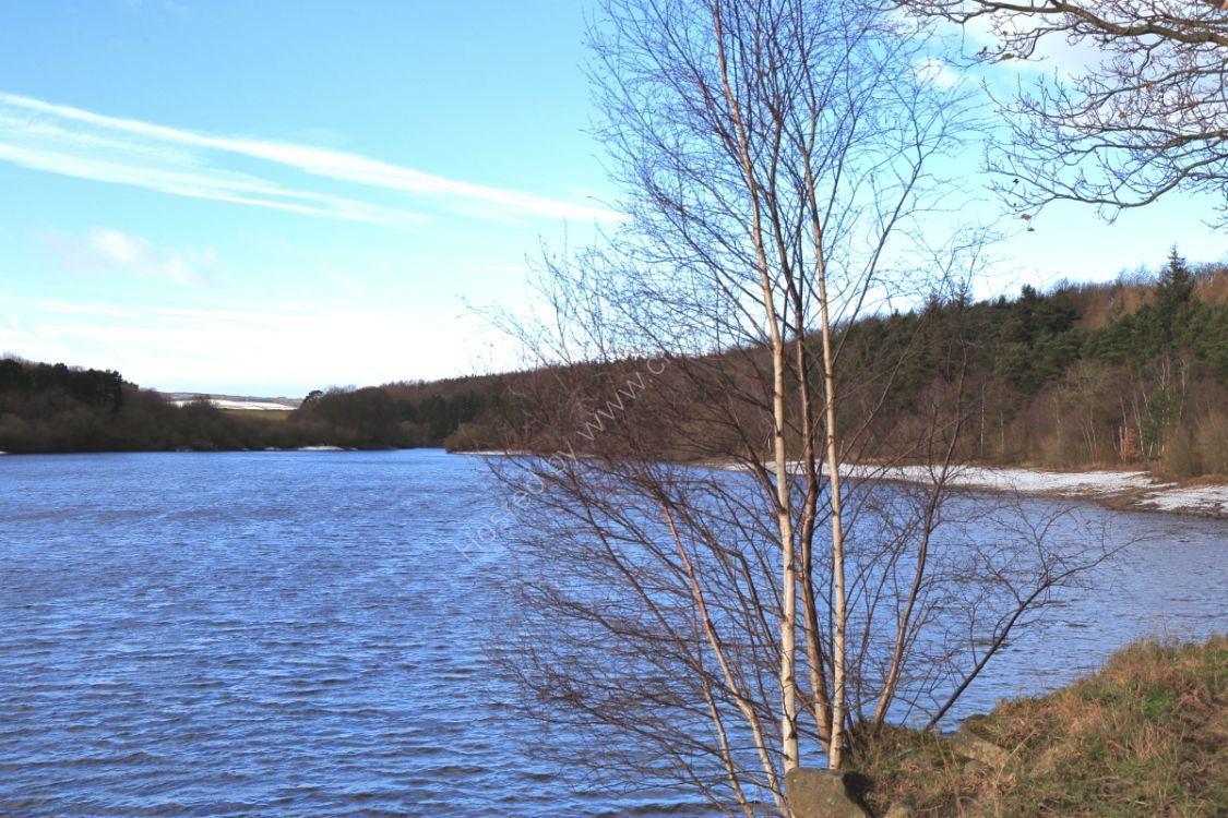 Swinsty Reservoir, winter
