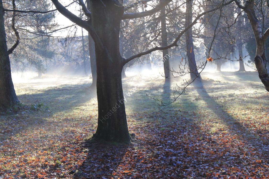 Mist in trees at Golden Acre, Leeds
