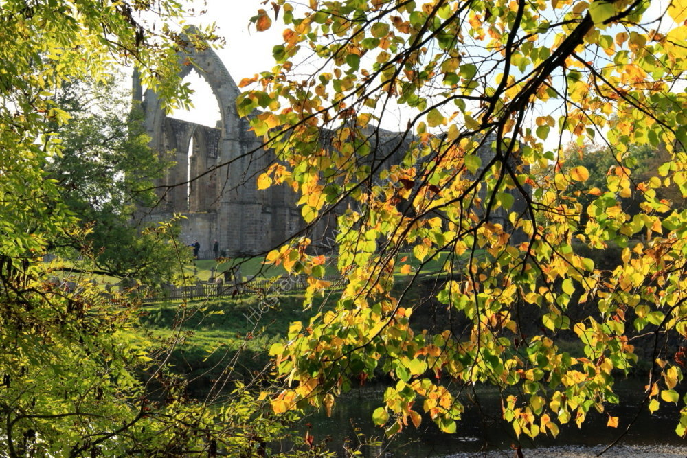 Bolton Priory through the trees, autumn