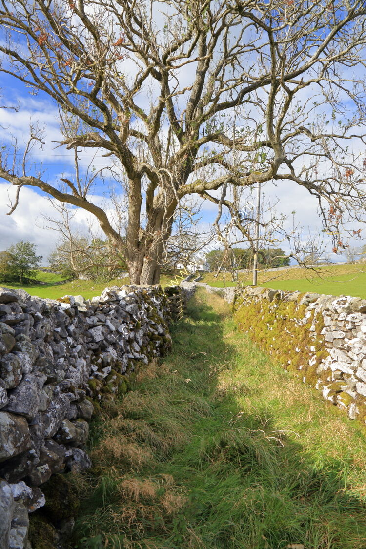 Drystone walls in old lane at Lower Winskill