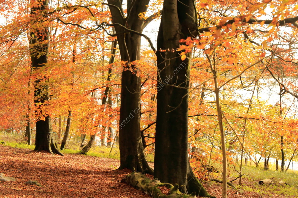 Trees in autumn at Malham Tarn