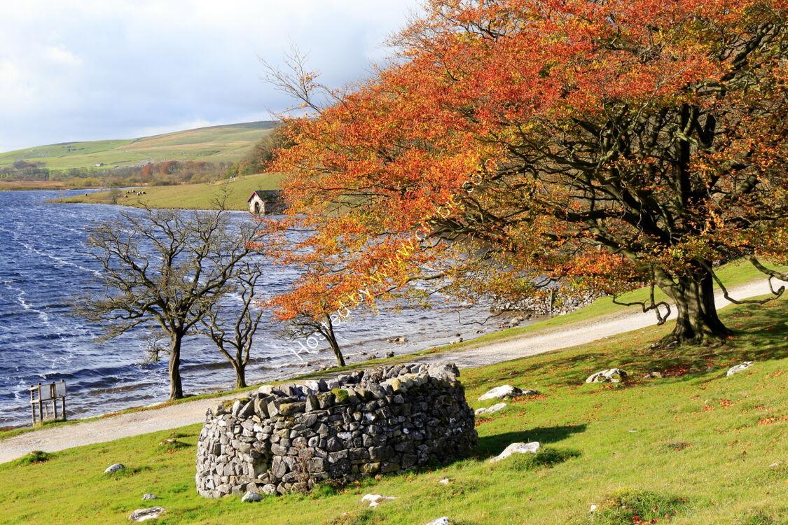 Tree in autumn colours at Malham Tarn