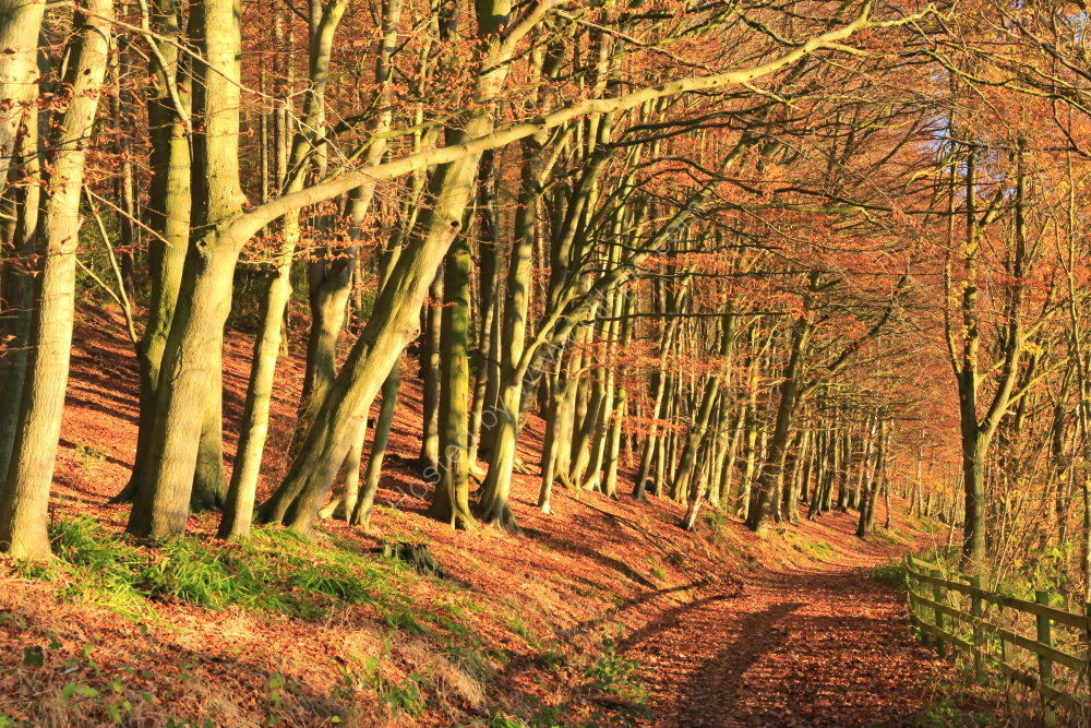 Autumn trees in Lindley Wood, Yorkshire