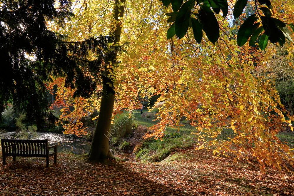 Thorp Perrow Arboretum, autumn