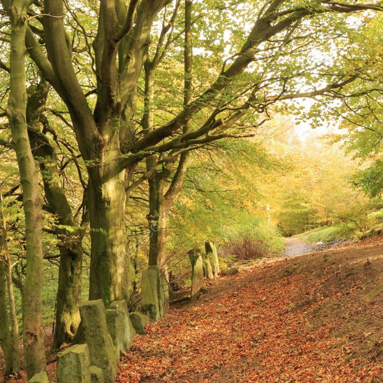 West Chevin, autumn