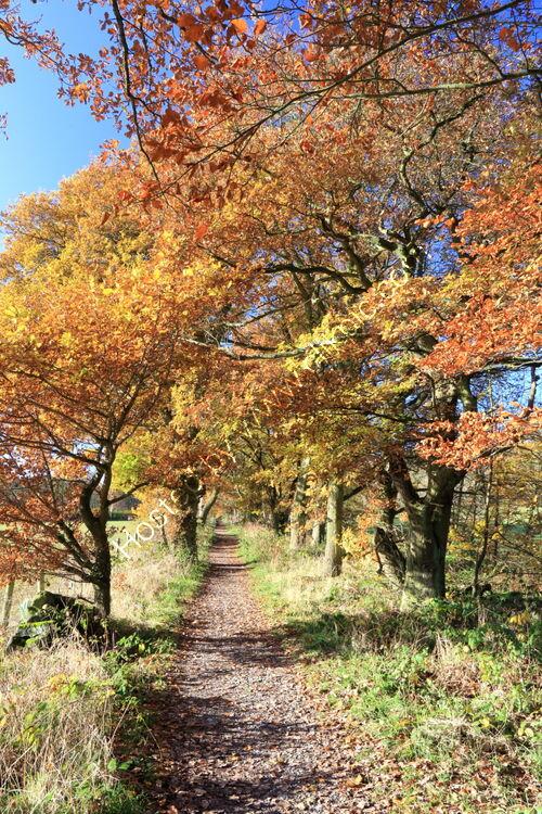 Autumn in King Lane, Adel, Leeds
