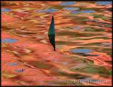 Autumn Reflection-Kawartha Lakes, Canada